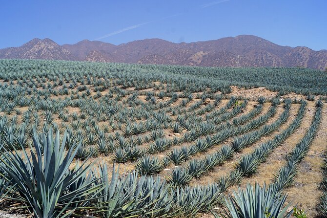 Tour to the land of Tequila, Jalisco.