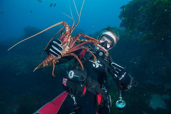 Rottnest Island Deep Dive Day Trips