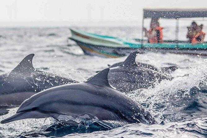 Dolphin Watching Boat Tour in Kalpitiya