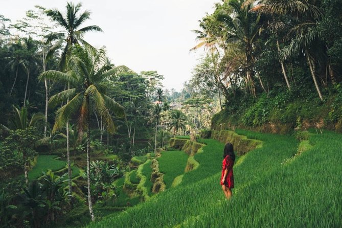 Bali Highlights : Nature, Waterfall, Rice Terraces and Volcano