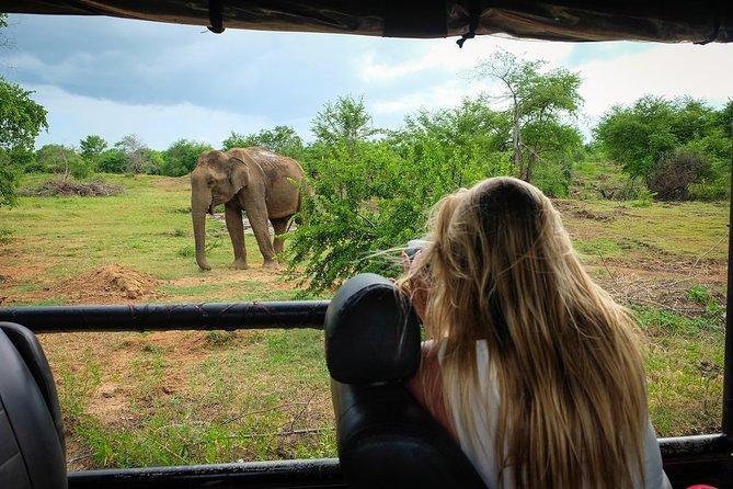 Sigiriya Dambulla and Kaudulla Safari Game Drive 2 Day Tour