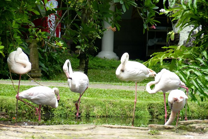 Bali Bird Park Flash Deal Promo Jul- Aug 2020