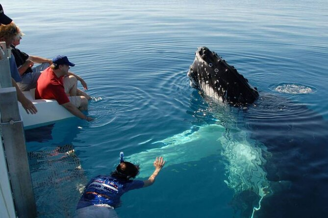 Mirissa Whale Watching Tour From Colombo
