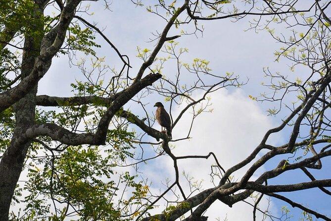 Birdwatching Trek in Anawilundawa Sanctuary from Kalpitiya