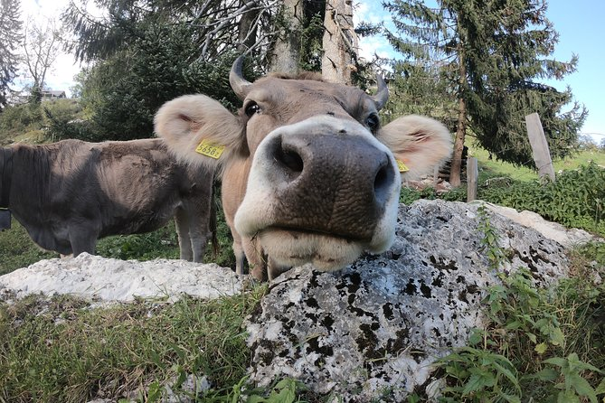 Farm Visit Walk