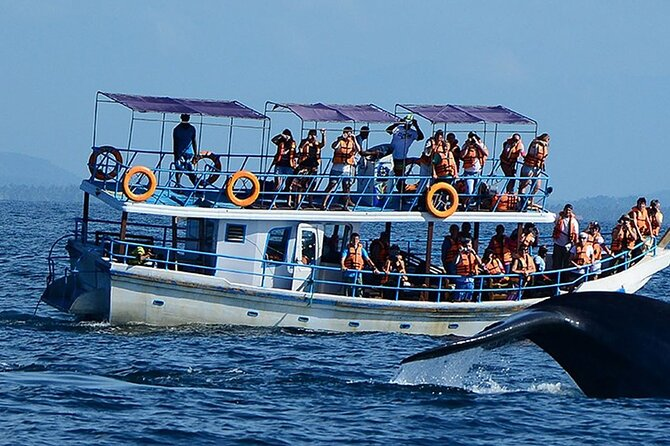 Mirissa Whale Watching Tour From Galle