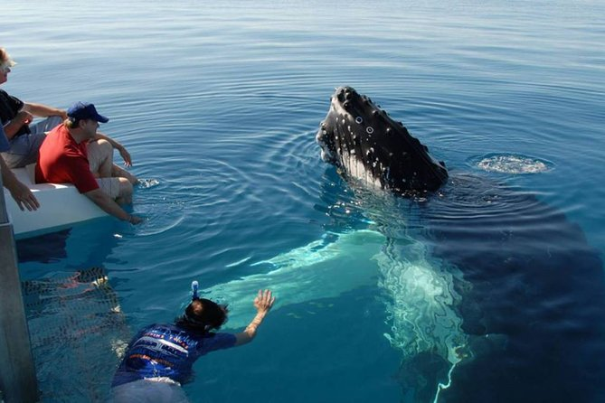 Mirissa Whale Watching Tour From Tangalla