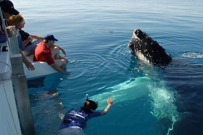 Mirissa Whale Watchin Tour From Hambantota