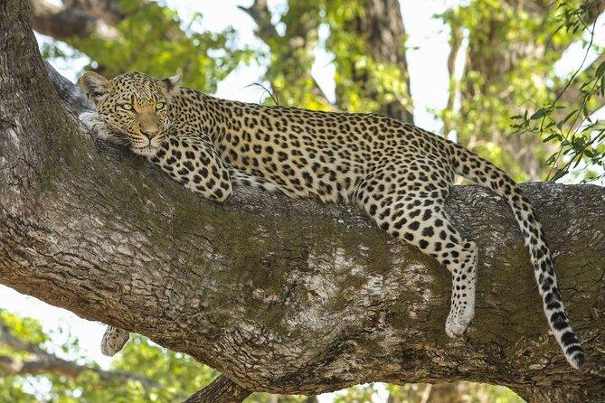 Private Safari Trip to Jhalana Safari Park with Transfers