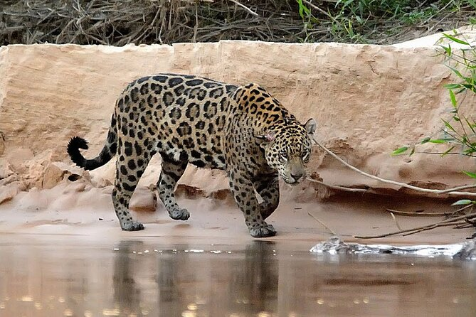 6-Days North Pantanal Experience - Following the footsteps of the Jaguar