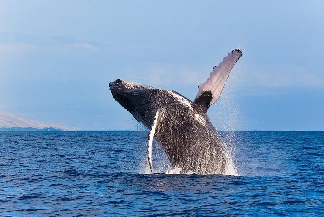 Whale Watching Tours on the Big Island of Hawaii