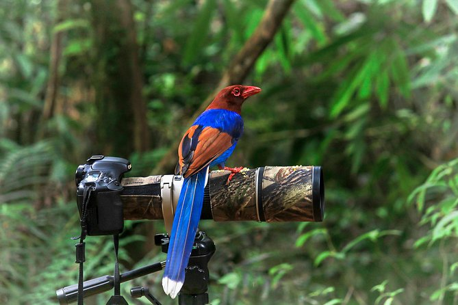 Birdwatching in Sinharaja Rainforest