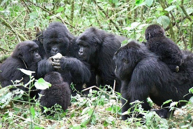 9 days Chimpanzee tracking, Tree climbing lions and Gorilla tracking Safari