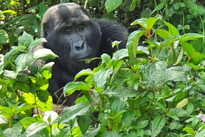 5 days Gorilla tracking, Lake bunyonyi and Lake mburo national park safari
