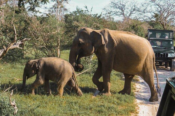 Yala National Park Safari from Mirissa
