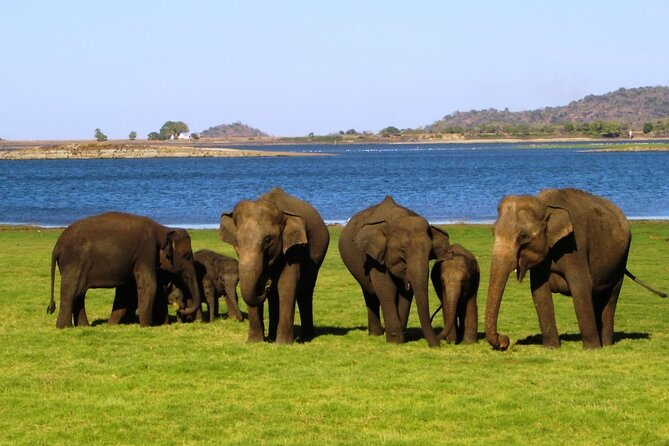 Yala National Park Safari From Hambantota