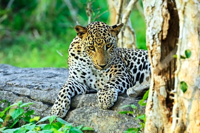 Yala National Park Safari From Bentota