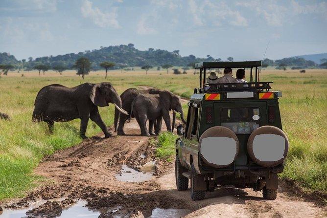 6-Day Best of Tanzania Wildlife Safari- Comfort