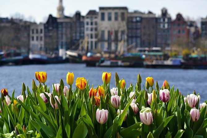Private Day Trip Tour to Keukenhof (Tulip Fields) with a local