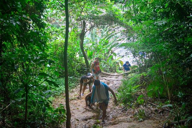 Vivid Day Tour in El Yunque Rain Forest