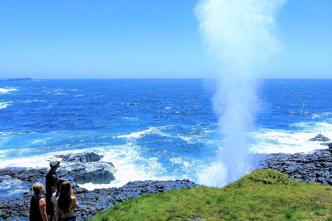 Erupting Blowholes and Ancient Rainforests with 'Personalised Sydney Tours'