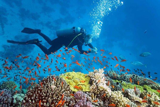Nha Trang Diving at Mun Island full day tour