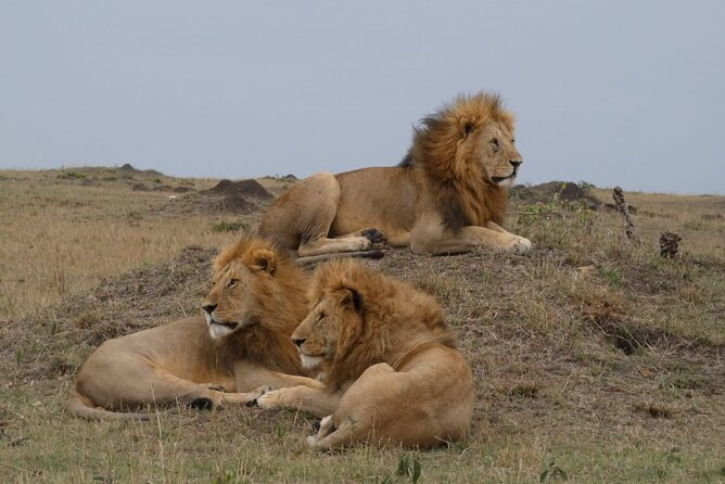 masai mara national reserve budget tour landcruiser