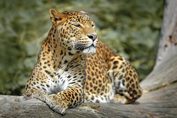 Wilpattu National Park Safari from Sigiriya