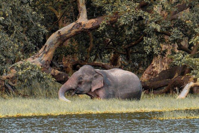 Wilpattu National Park Safari from Habarana