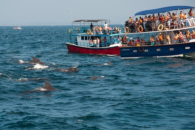 Mirissa Whale & Dolphin Watching Excursion