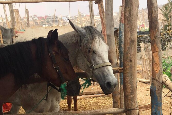 Half-Day Horseback Riding in Aourir with Berber Meal