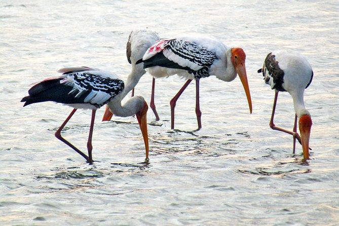 Birdwatching in Jaffna Lagoon