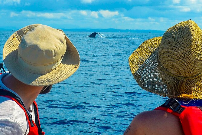 Whale Watching Boat Tour from Ahungalla