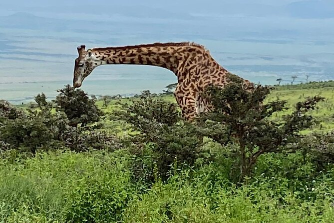 3 Days Tanzania Safari & Ngorongoro Crater Tour with Africa Natural Tour Ltd.