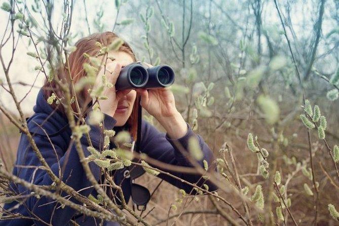 Day tour from Tirana to Karavasta Lagoon - birdwatching program