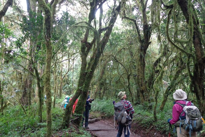 Private Full-Day Hiking Tour in Mount Kilimanjaro