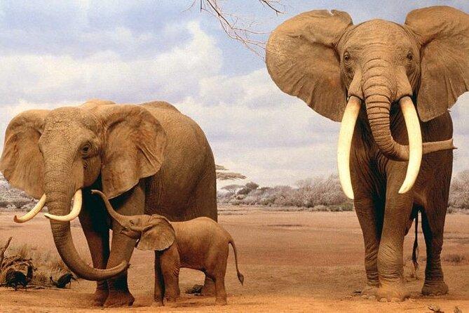 10 Days 9 Nights Samburu,Aberdare, Lake Naivsha, Bogoria Safari Package