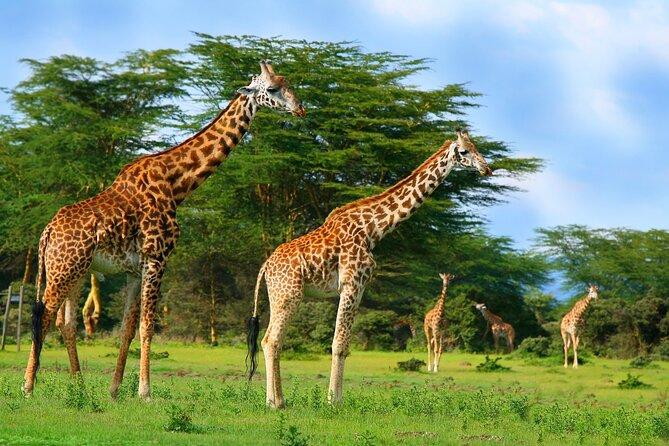 Private Nairobi Day Trip To Crescent Island Game Park - Lake Naivasha