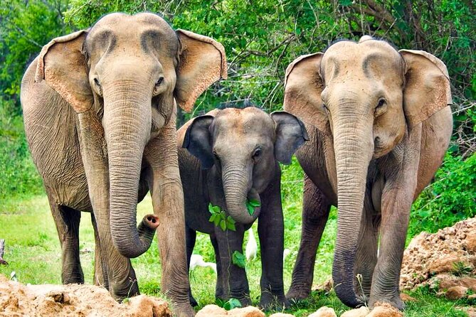 Yala National Park Safari from Beruwala