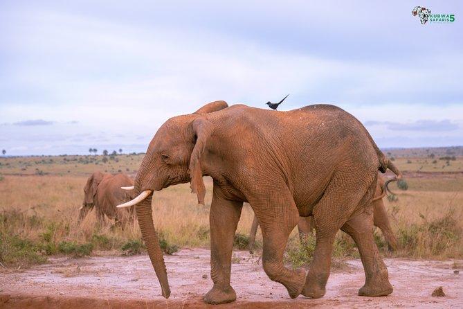 3 Days Wild Tour Queen Elizabeth National Park Safari Uganda