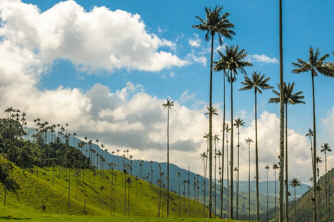 Full Day Tour of Cocora Valley, Salento, and Coffee Farm Tour (from Armenia)