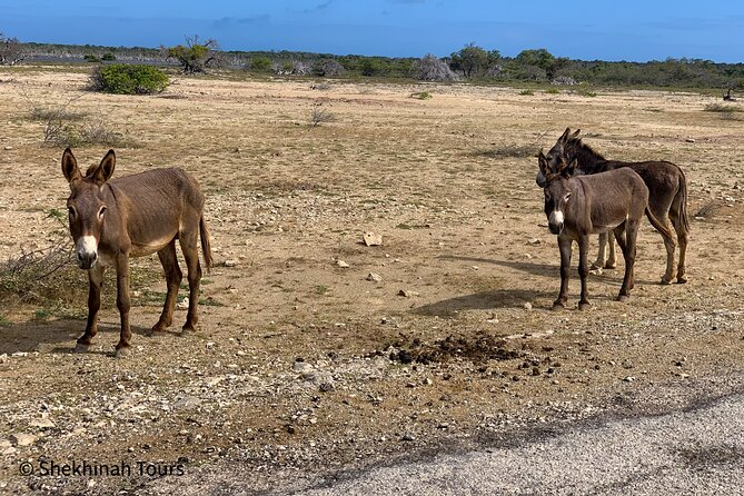 Donkey Sanctuary Tour with a Local Native Guide