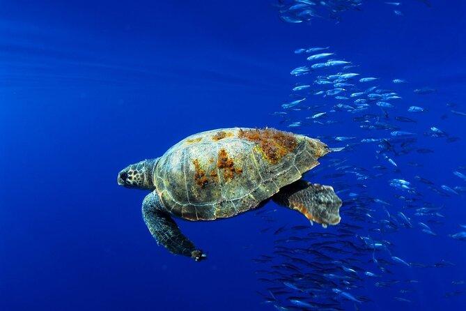 Release turtles in Puerto Escondido