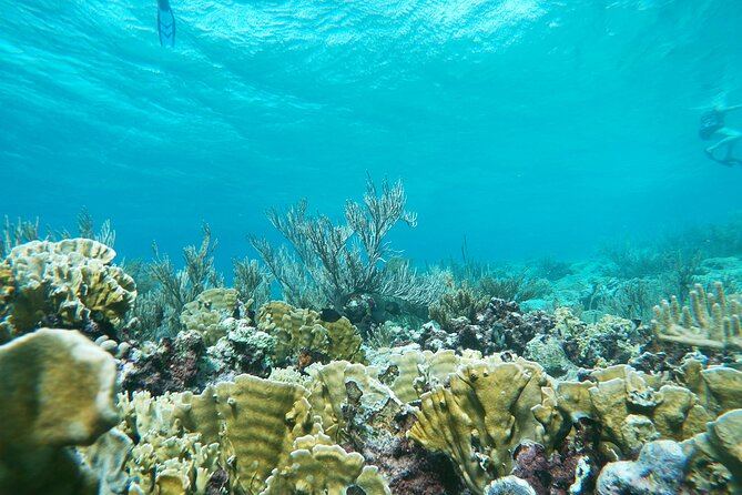 Eco-friendly private snorkel tour: Baby Beach & Mangel Halto