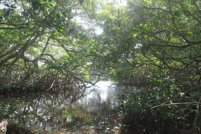 Eco-friendly private mangrove hike by Spanish Lagoon