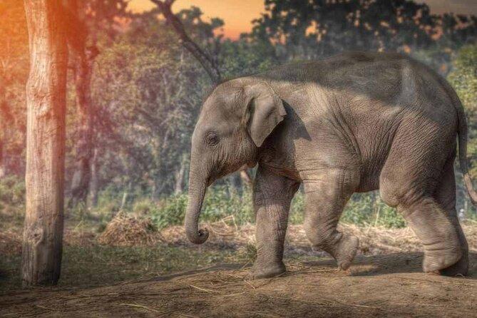 Chitwan National Park Jungle Safari Tours 3 days
