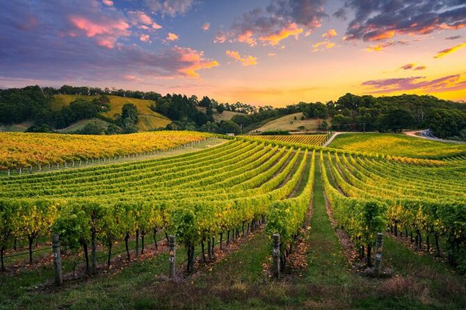 Swan Valley Sunset Wine Tour - Premium Small Group Tour