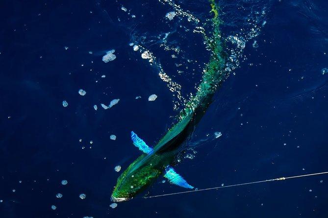 Full-Day Private Offshore Fishing Trip in Villanova