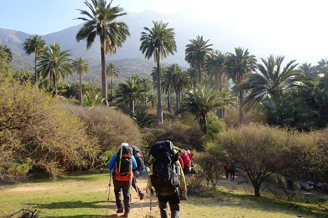 Private Full Day La Campana Hill Trekking Tour from Santiago