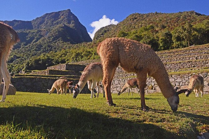 Salkantay Trek 5 Days with entrance to Machu Picchu